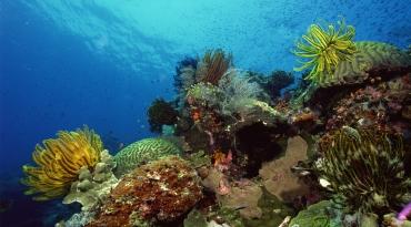 越南芽庄 Oceans5 潜水俱乐部