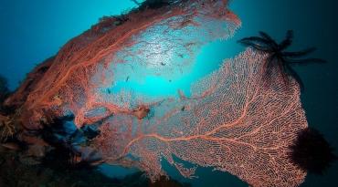 菲律宾薄荷Bohol潜水套餐--Sea Quest Dive Center